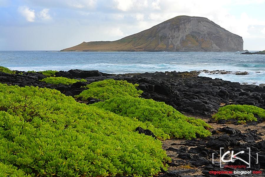 Hawaii_0213