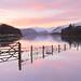Winter Pinks by midlander1231