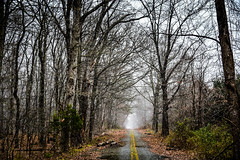 Abandon Road with Leaves and Trees at Lawrence Park Centreville VA