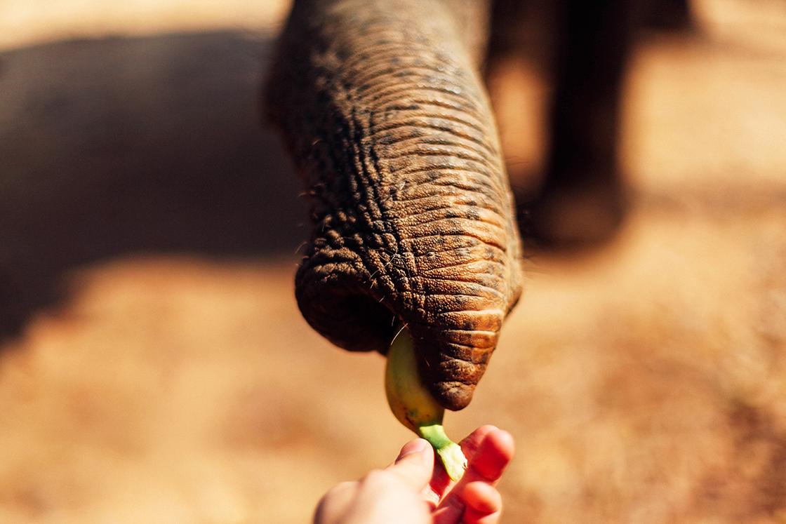 bye elephant 2