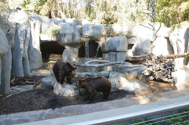 san diego zoo-29web