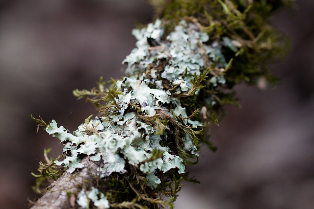 Decorated with Lichen