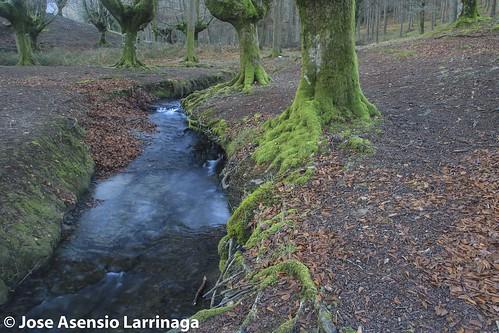 Parque Natural de Gorbeia  #DePaseoConLarri #Flickr -3057