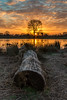Portrait of a Bushy Park sunrise