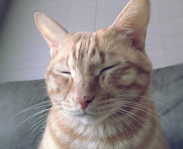 眩しくても眠いのです。 #cat #cats #catsofinstagram #catstagram #instacat #instagramcats #neko #nekostagram #猫 #ねこ #ネコ# #ネコ部 #猫部 #ぬこ #にゃんこ #ふわもこ部