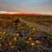 Death Valley Super Bloom Sunrise by Jeffrey Sullivan