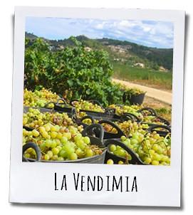 Eind september vindt in de Jalónvallei de druivenoogst plaats