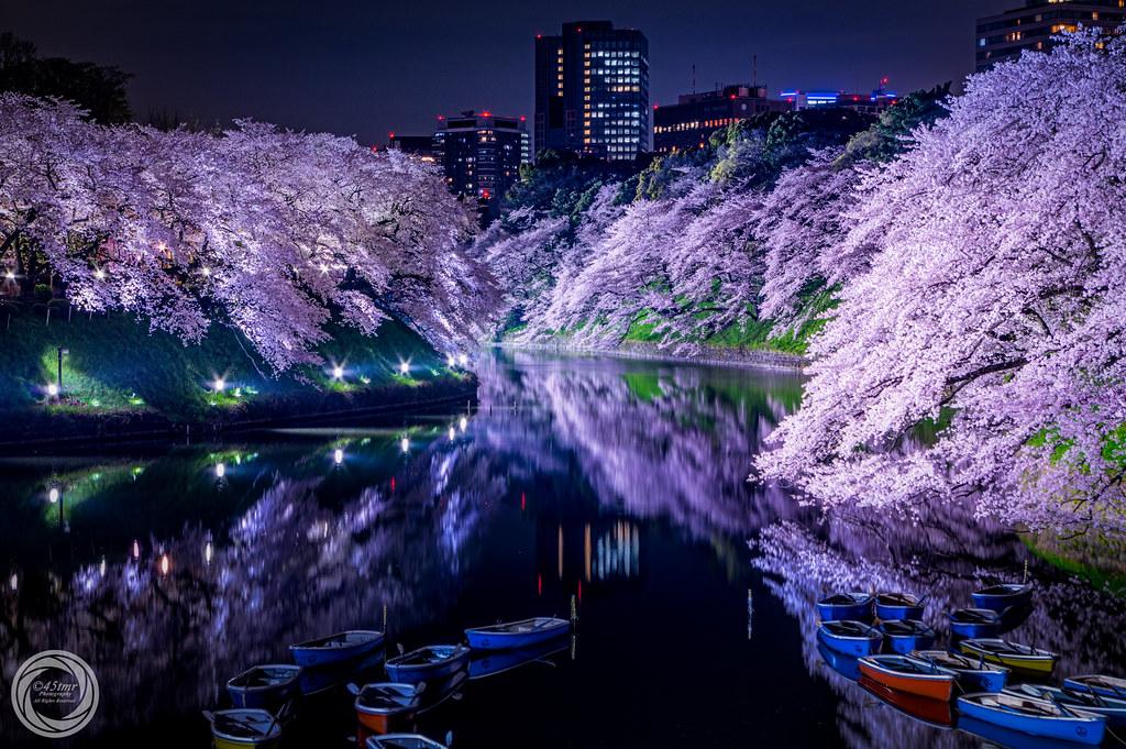 Calmness of Spring Night, Tokyo Chidorigafuchi