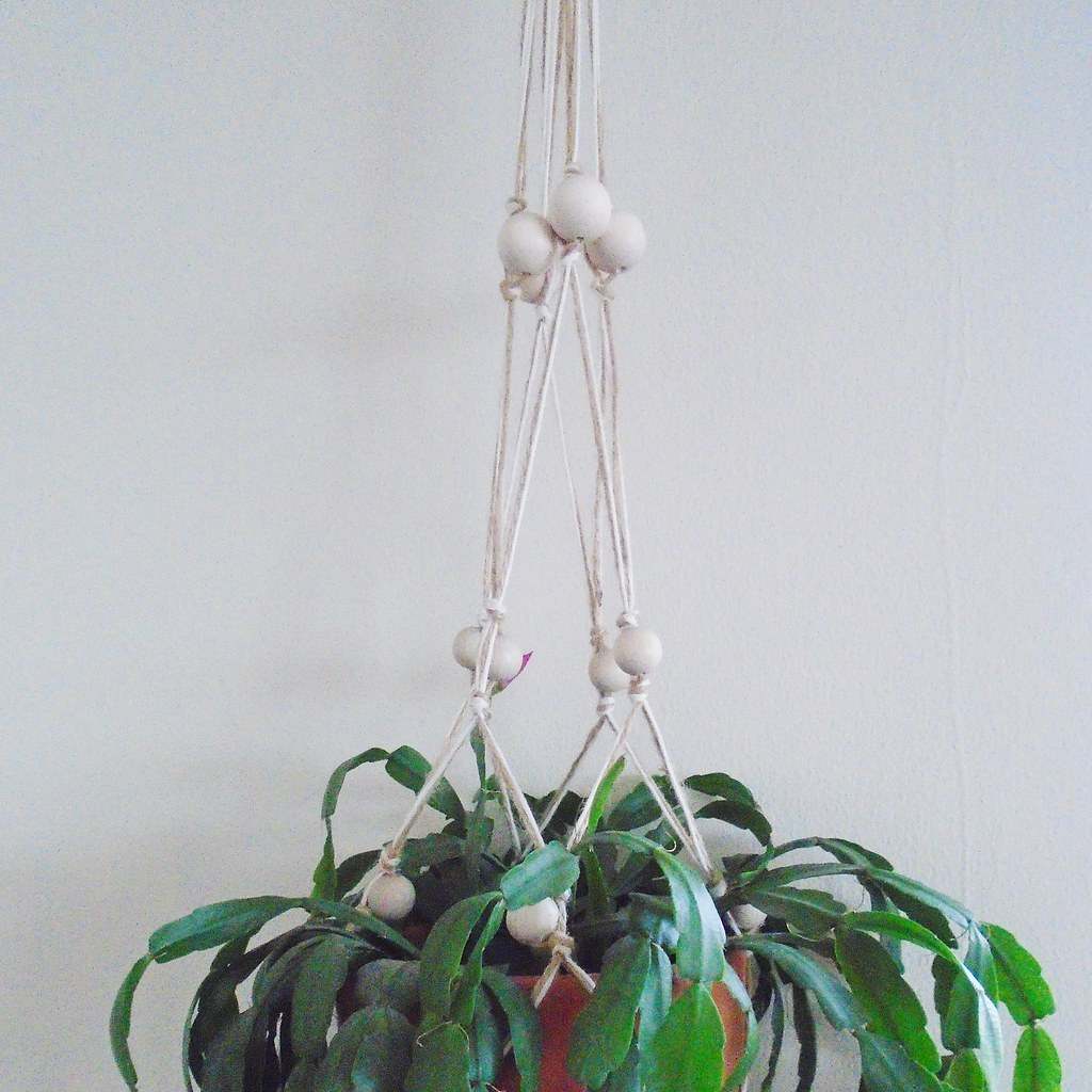 easter cactus in my macrame plant hanger