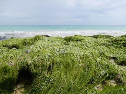 Playa del Carmen - zeewier