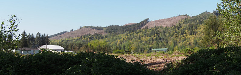 Deforestation Near Gold Bar: The Cascades used to look a lot like this before the forests were replanted.
