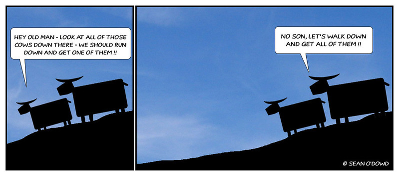Cows_toon