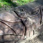 Carved bat n Ashton Park, Preston