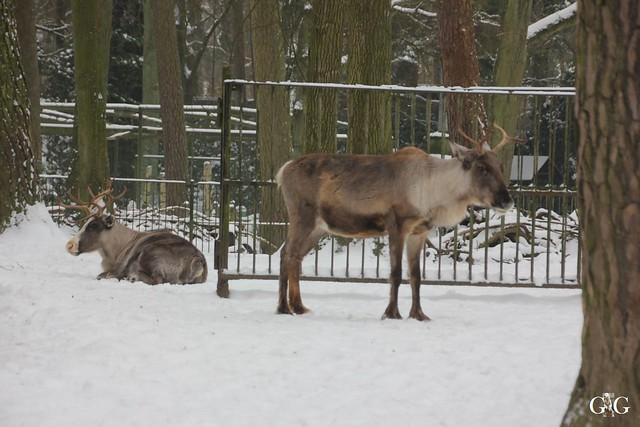Besuch Zoo Rostock 23.01.201699