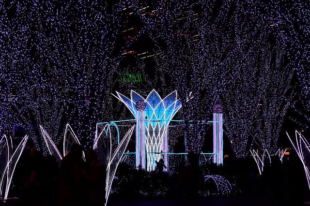 Wish Flower_光の街・博多