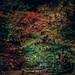 Magic forest 魔法森林 in Japan Atami, Shizuoka 熱海梅園  日本靜岡   DSC_7860 by Ming - chun ( very busy )
