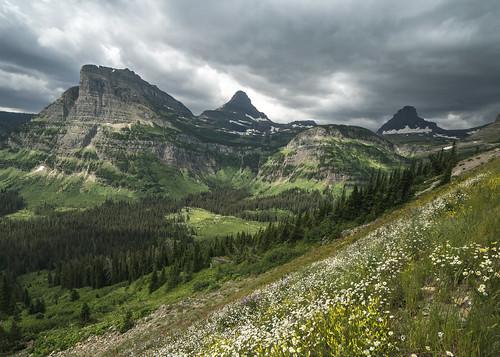 Heavy Runner Mountain- Wildflowers