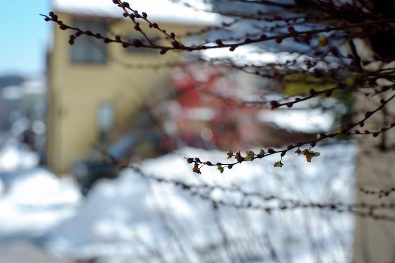 sunshine, snow, sereneness