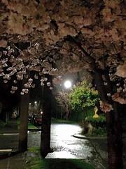 Nighttime Springtime, Harvard & Aloha #3