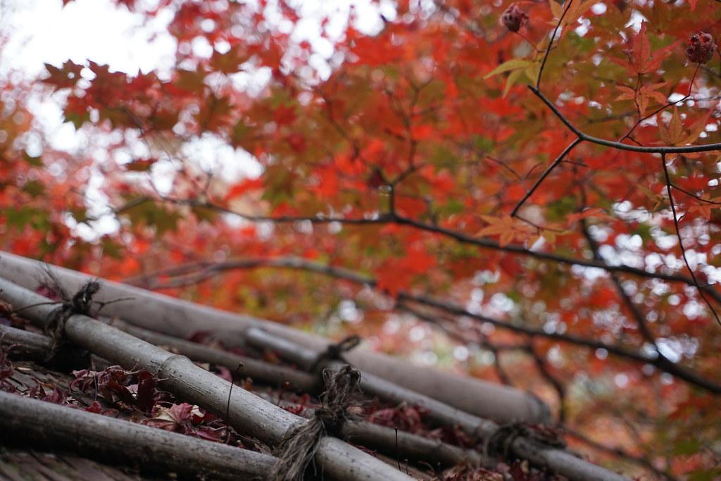 20151129_嵐山・二条紅葉旅行_03