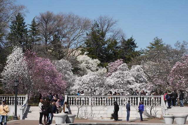 土, 2016-03-26 13:46 - Brooklyn Botanic Garden