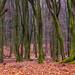 Forest by Marc.van.Veen
