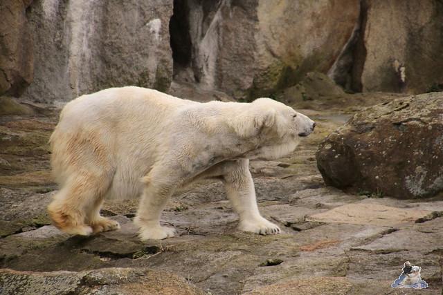 Zoo Berlin 18.03.2016  015