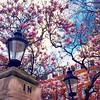 Spring in London - Instagram