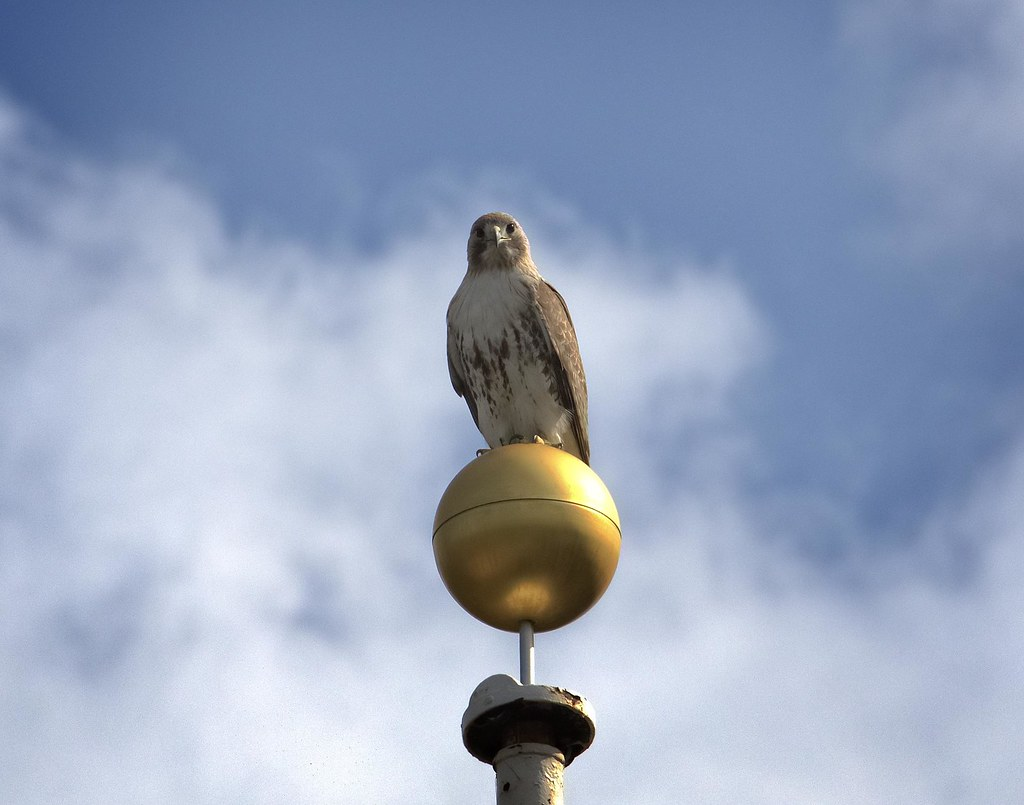 Christo, king of the flagpole