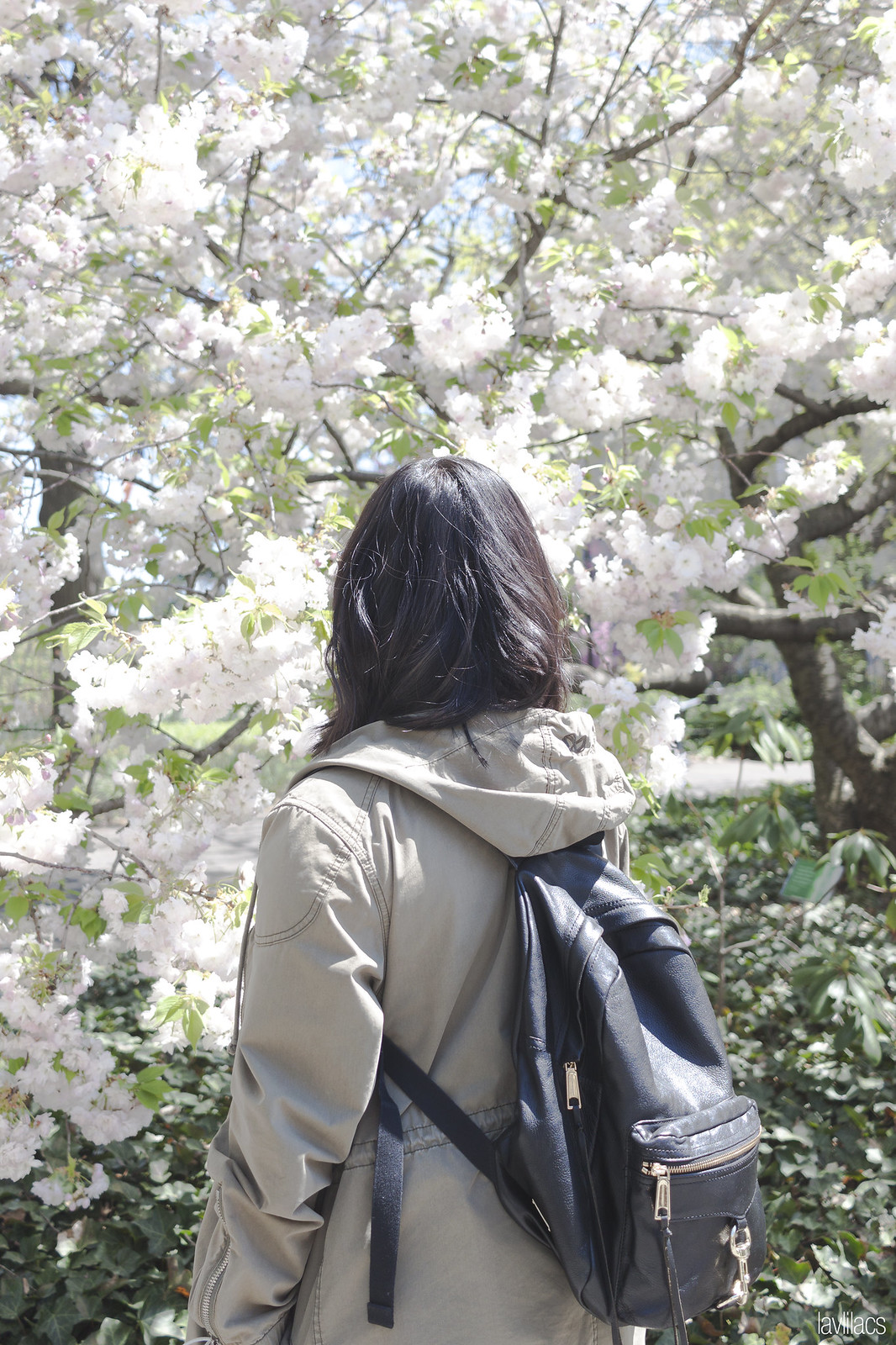 Brooklyn Botanic Garden 2016 Japanese Cherry Blossoms - Rebecca Minkoff MAB Backpack in Black