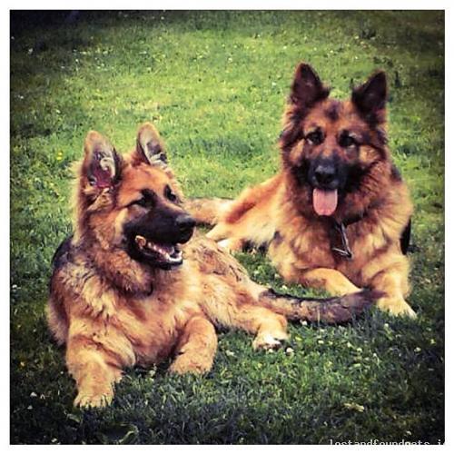 Fri, Jan 8th, 2016 Lost Female Dog - Dungarvan, Knockaun, Cappagh, Waterford