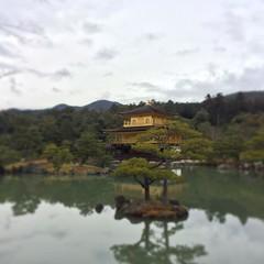 金阁寺 #travel #life #Japan