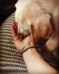 Quiero un amigo canino.