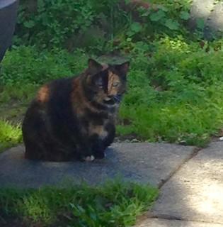 Berkeley Cat