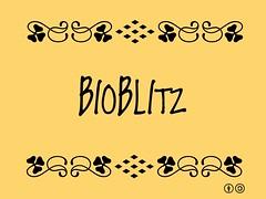 Buzzword Bingo: bioblitz
