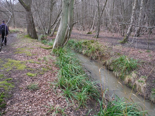 Spittal Brook, Danemead Wood