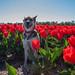 Kaila in tulip fields by Monika Kalczuga (off for now)