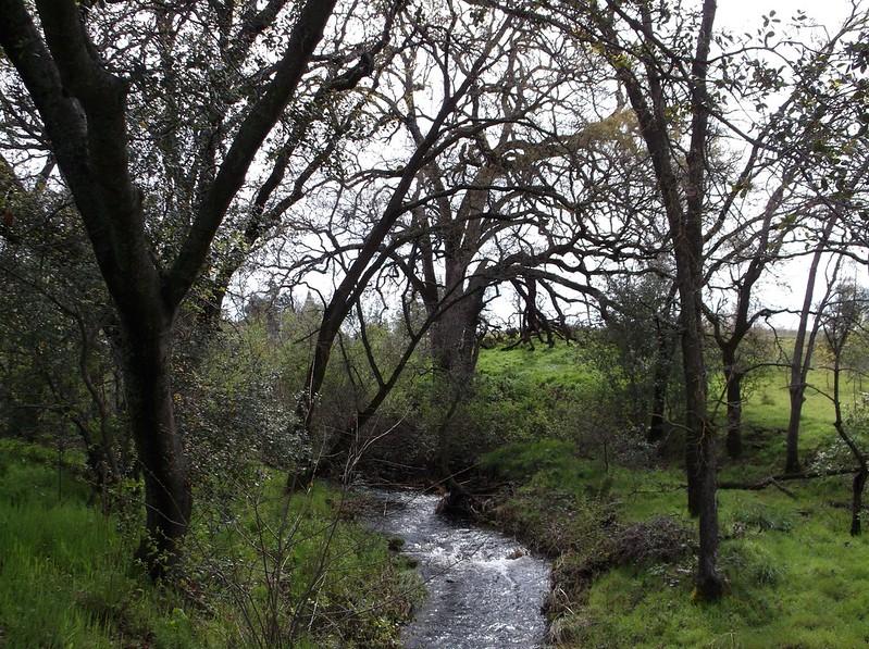 Strap Ravine woodland