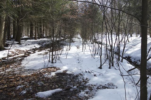 DSC00973 Wolf Run Road