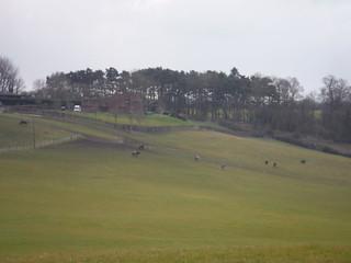 Farm near Aston Abbotts