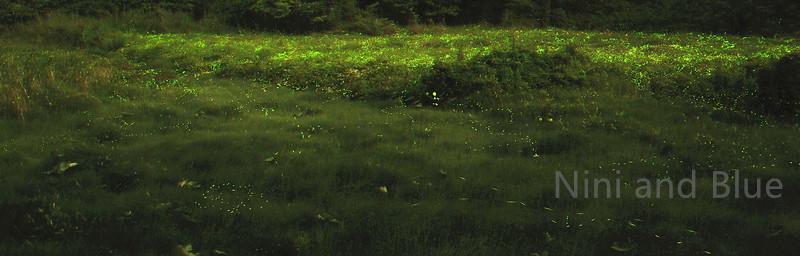 南投草湳濕地螢火蟲03