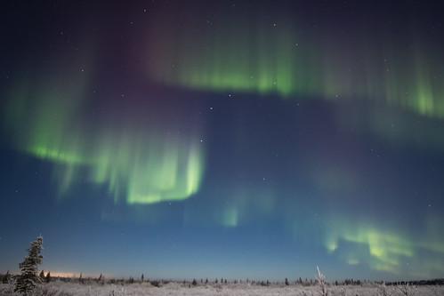Tundra auroras