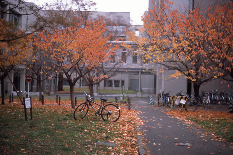 fall in the north campus