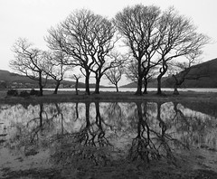 Trees reflection.