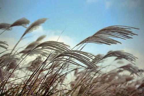 There is something beautiful in fieldrice     #photograph #picsart #photo #kpop #music #selfie #pictureoftheday #hot #traveler #travel #instatravel #food #foodporn #foodie #instafood #beautiful #nature #like4like #dubsmash #sunset #sunrise #sunshine #vine