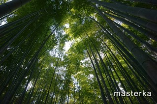 報国寺の竹