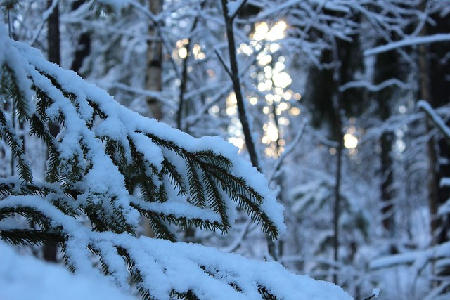 February forest26
