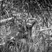 Camouflage por julien.ginefri