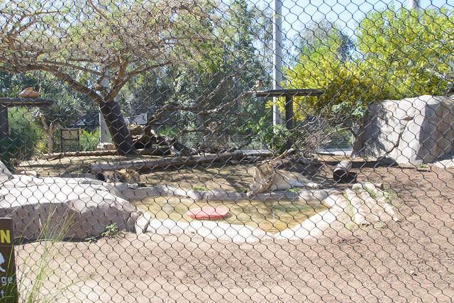 san diego zoo-72