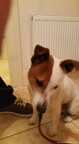 Mon, Feb 8th, 2016 Found Male Dog - Banagher Road, Eyrecourt, Galway